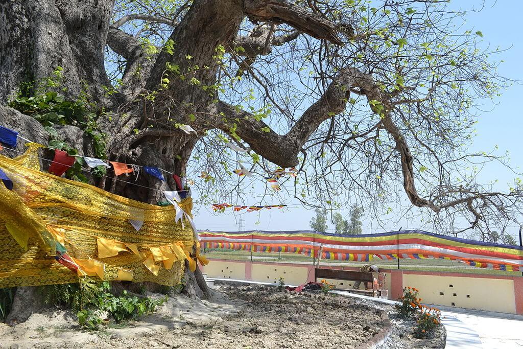 Buddha Relic Distribution Site